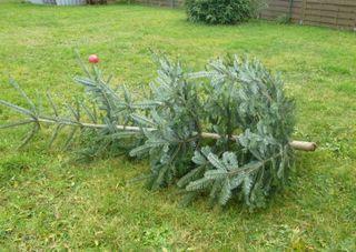 Dieser Weihnachtsbaum hat ausgedient.