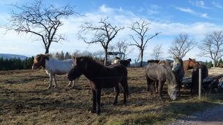 Ponyidylle auf dem Mühlstein
