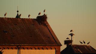 Storchenparade auf Kirche und Rathaus in Wagshurst