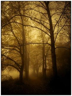 Geisterhaft vernebelter Wald auf dem Kahlenberg bei Ringsheim
