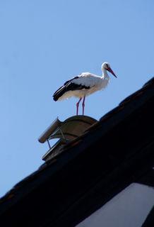 Storch auf Kamin