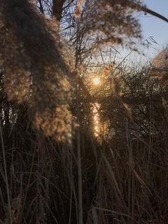 Sonnenuntergang im Ried