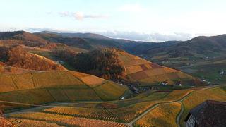 Goldener Herbst beim Durbacher Schloß