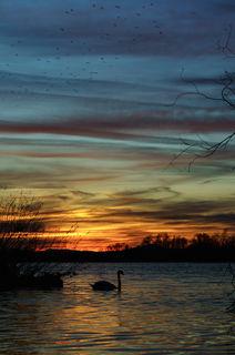 Sonnenuntergang am Kehler Rheinufer