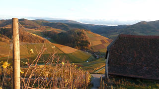 Goldener Herbst vom Durbacher Schloß