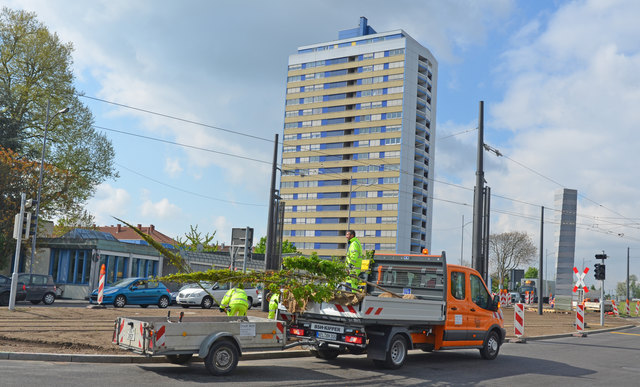 Verschiedene Baumsorten, die neu gepflanzt werden, prägen bald den Kehler Stadteingang.