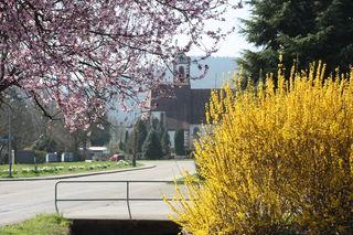 Überall entfaltet sich die Natur, gleichzeitig fliegen Pollen.