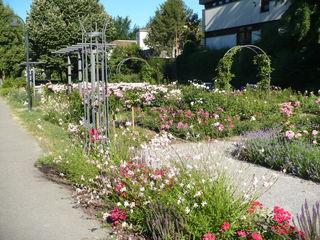 Der Sonne entgegen: Kletterhilfen und Rosensäulen gliedern den neu angelegten Pflanzstreifen auch vertikal