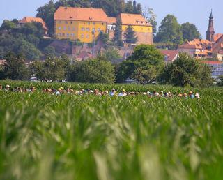 Die Landwirte im Versuchsfeld, im Hintergrund das Mahlberger Schloss