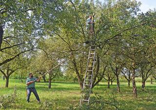 Gemeinsam schneiden Markus Herrel (links) und Hansjörg Haas den Obstbaum zurück.