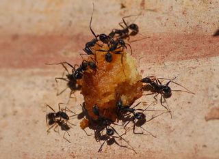 Essensreste locken Ameisen, Motten und Mäuse an. Nicht immer muss ein geprüfter Schädlingsbekämpfer her.