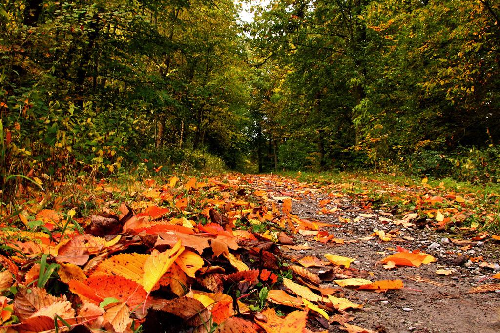 Der Herbst lockt mit seinen ganz besonderen Reizen hinaus in die Natur.