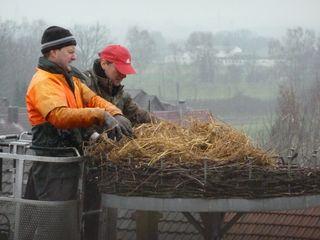 Mit Reisig und Stroh wurde das Nest für ein neues Storchenpaar bereit gemacht.