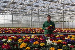 Ein Meer von Pflanzen und Blüten: Markus Decker im Gartencenter in Großweier