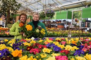 Im Gartencenter Göppert werden Frühlingsgefühle geweckt. Inhaberin Stefanie Göppert (links) und Mitarbeiterin Tanja Schuh mitten in einem Blütenmeer aus Primeln.