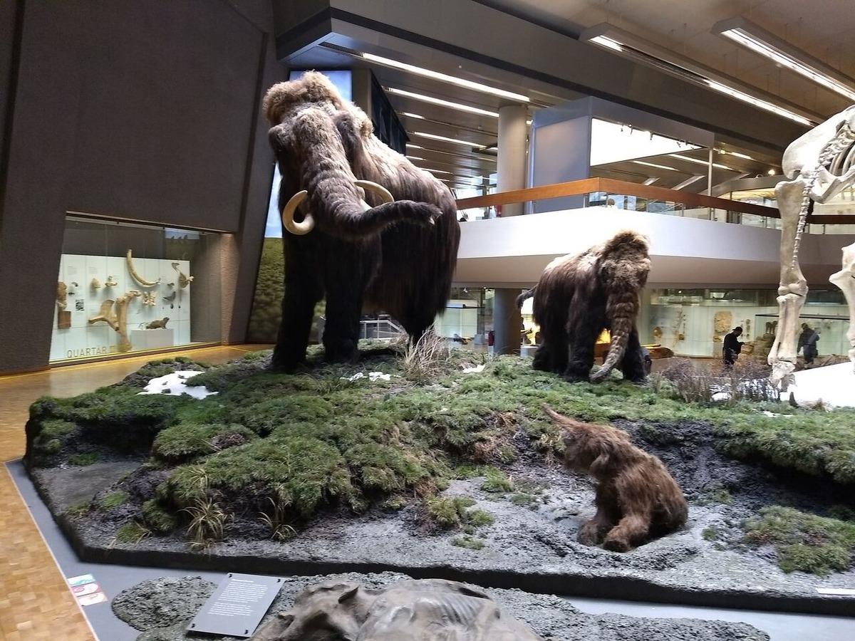 Nicht nur Mammuts gibt es zu bestaunen.