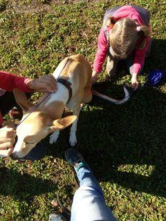 Am Scheffel lernen Kinder, mit Tieren umzugehen.