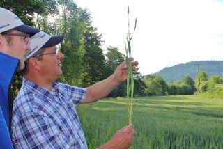 Die Qualität des Getreides aus der Region wird ständig kontrolliert, bevor es gemahlen wird.