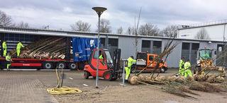 200 junge Kastanien, Ahornbäume, Buchen, Eichen und Linden wurden in der vergangenen Woche per LKW von einer großen Baumschule in Düsseldorf nach Kehl transportiert.