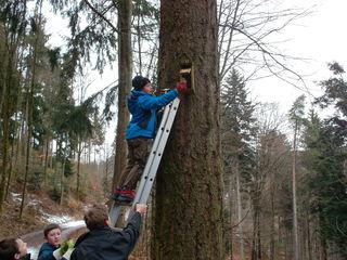 Das Bild zeigt die Waldläufer bei der Säüberung  eines Kasten auf Blaubronn. Auf der Leiter ist Luca Schnurr.