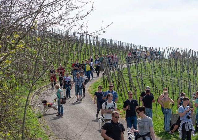 Das schöne Wetter nutzen über 8.000 Menschen, um am Bierwandertag teilzunehmen.