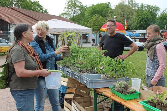 Pflanzentauschbörse noch bis 15 Uhr auf dem Frühjahrsfest an der Feldscheune in Kehl