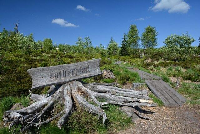 Die Natur wird sich im Nationalpark weitestgehend selber überlassen, wie hier am Lotharpfad.