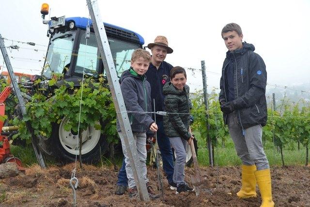 Jungwinzer sind die Zukunft des Weinbaus (v. l.): Jakob Frei, Erik Kiefer, Frederik Gehring und Jakob Schmidt