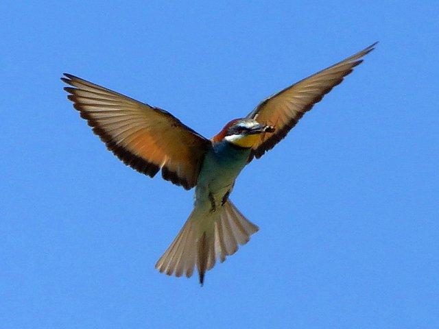 Vögele Achern
